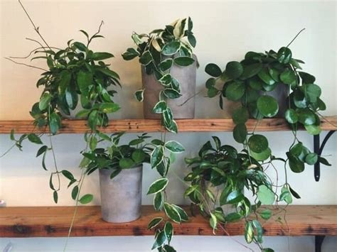 create   tiny house jungle    solutions