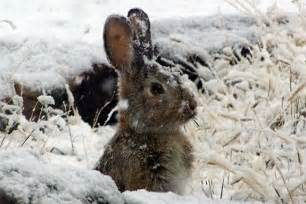 animals in the winter weekday little explorers animals in winter north shore kid and family fun in massachusetts