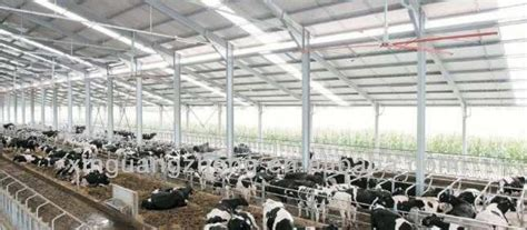 Production Shed by Professional Design Steel Structure Cow Farm House Buy