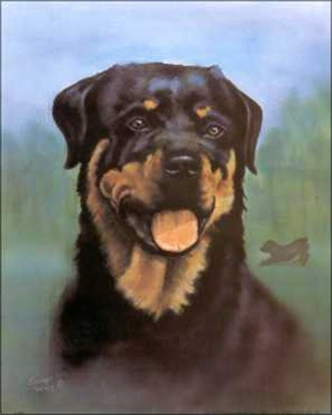 rottweiler puppies for sale sydney indian shepard mix dogs models picture