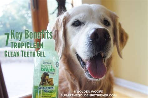 golden retriever teething age pet dental health tropiclean clean teeth gel smoochurpooch golden woofs