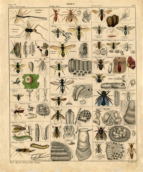 printable insect poster instant art printable insects natural history the