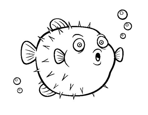 porcupine puffer fish free colouring pages