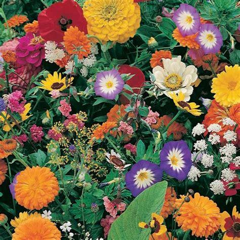 Roll Out Flower Garden Garden Frangrance Garden Roll Out Roll Out Flowers