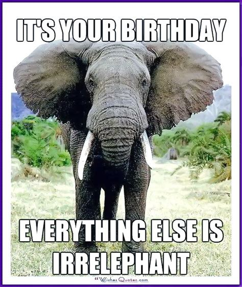 Birthday Animal Meme - best 25 cat happy birthday meme ideas on pinterest