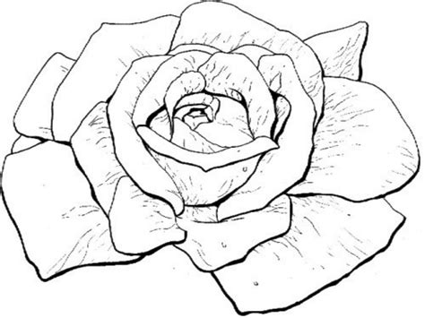 large rose coloring page big roses coloring pages coloringsuite com