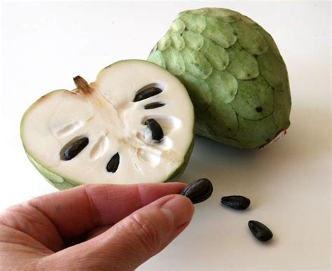fruits with seeds introducing cherimoya fruit nature s