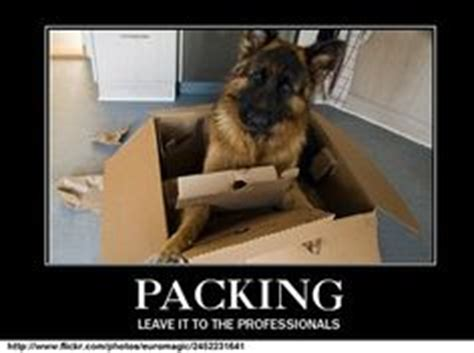 Memes About Moving - moving memes on pinterest moving day trucks and alpacas
