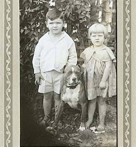 pitbull nanny staffordshire bull terrier once known as the nanny because breeds picture