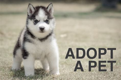 adoption puppies related keywords suggestions for homeless dogs for adoption