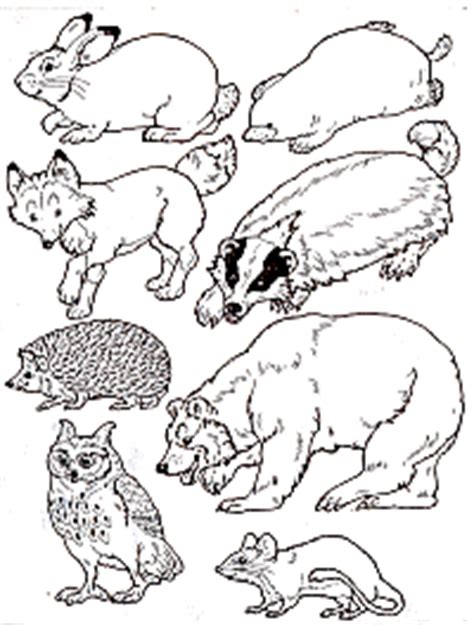 Kindergarten Dcsm Technology Website The Mitten Coloring Page