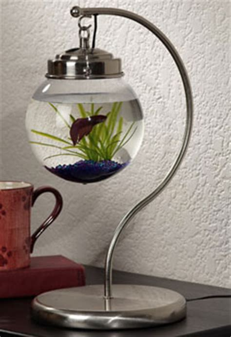 Desk Fish Bowl by Hanging Aquarium From Opulent Items Popsugar Pets