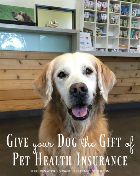 health insurance for dogs give your the gift of pet health insurance petsbest golden woofs