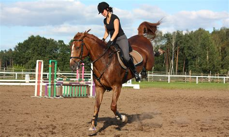 my horse is not perfect but he s perfect for me the horseaholic