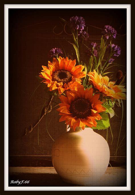 vaso di girasoli vaso di girasoli foto immagini piante fiori e funghi