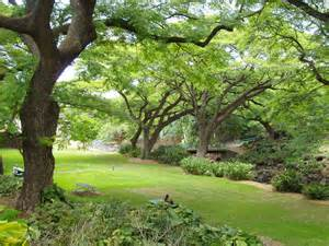 Honolulu Botanical Gardens File Lili Uokalani Botanical Garden Honolulu Hi Jpg