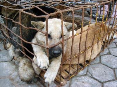 mi sento in gabbia cani in gabbia