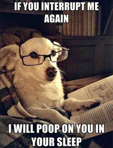 Dog With Glasses Meme - silence while i read