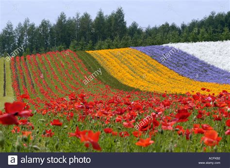 dahlia lens snippets 100 popular flower download best flower arrangement
