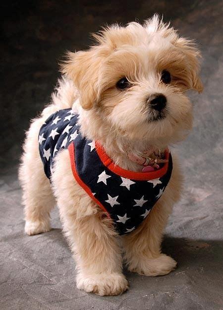 patriotic puppy patriotic puppy america