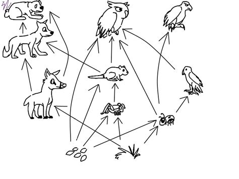 easy food web to draw food web by constintinos on deviantart
