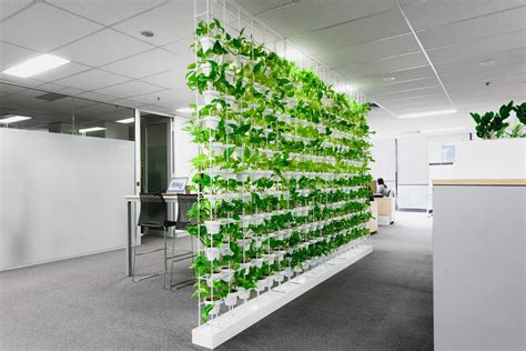 green wall 6 business benefits of green walls ambius australia