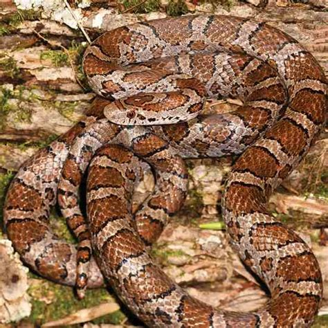 how to avoid snakes in backyard how to avoid snakes in backyard 28 images eastern