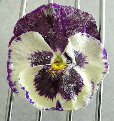 Would You Chosen To Do An Edible Garment On Project Runway by Best 25 Flowers Ideas On Chocolate