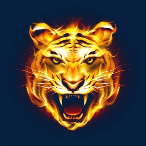 hd tiger picture fierce flames tiger clipart ferocious