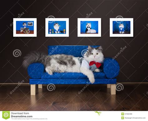 lazy on the couch lazy cat is resting on the couch stock photo image 51502490