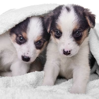two puppies image gallery two puppies