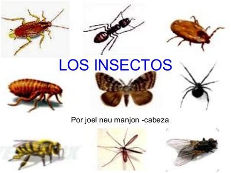imagenes animados de insectos los insectos