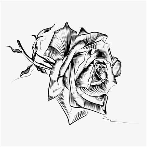 玫瑰花素描素材图片免费下载 高清png 千库网 图片编号8748784