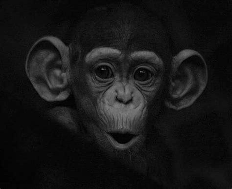 imagenes bellas en blanco y negro 20 hermosas fotos de animales en blanco y negro cofregrafico