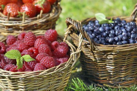 backyard berries garden design with structures bird and berry backyard progress part 54 chsbahrain com