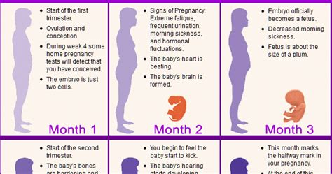 pregnancy guide a month by month pregnancy guide for time with all the helpful tips and information that you need books telugu web world pregnancy stages tips for