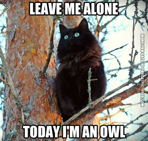 Funny Black Cat Memes - today i m an owl fun cat pictures