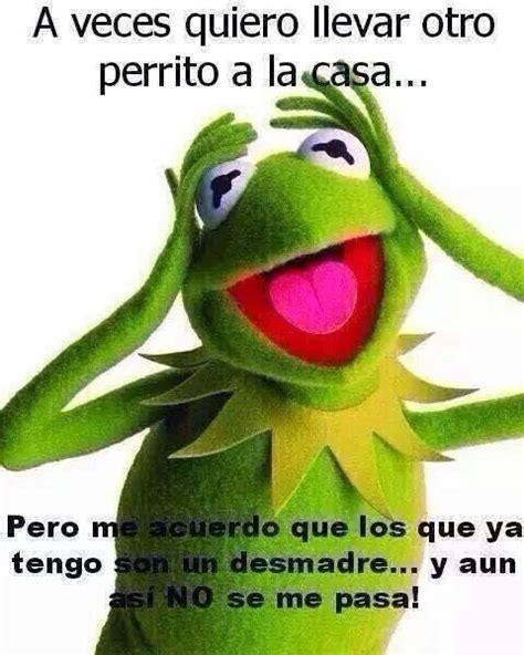 Memes De La Rana Rene - meme de la rana rene funnyland pinterest no se