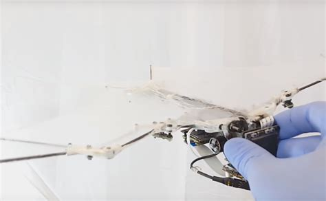 designboom drone caltech s bat robot stretches its wings