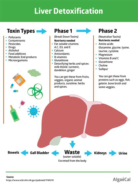 Supplements For Phase 2 Liver Detox by How To Detox Your Naturally For Bone Health