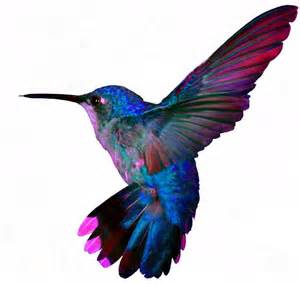 25 best ideas about colorful hummingbird tattoo on