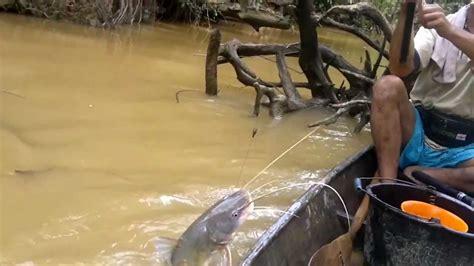 Pancing Mania mancing mania baung sungai paling menegangkan dan mengasikan