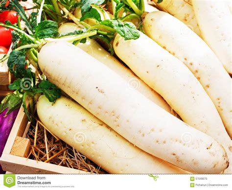 edible root vegetables white radish stock photo image 57048070