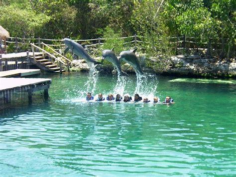 hängematte schweiz bild quot delphin show im xel ha nationalpark quot zu xel ha