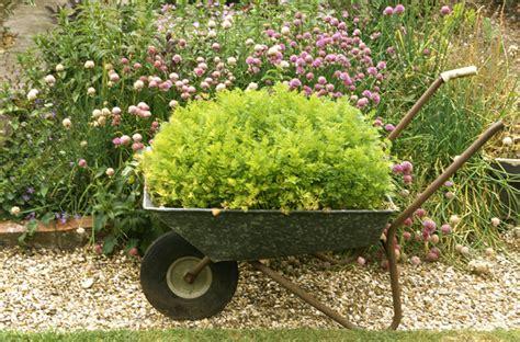 Plant Cloddig plant pot photos design ideas remodel and decor lonny
