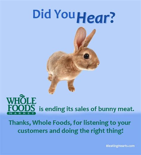 house rabbit network whole foods ends the sale of rabbit meat rabbit advocacy network