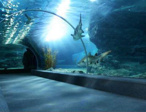Projecteur Led Aquarium by Remplacement Le Et Gamelle Iodure Par Equivalent Led
