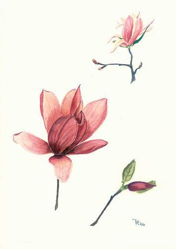 dusty pink l shade watercolor magnolia with great shades of dusty pink ink