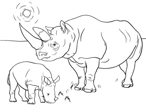 rhino coloring page pin by muse printables on coloring pages at coloringcafe