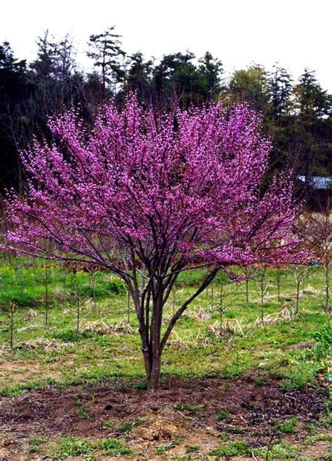 best trees to plant flowering trees for small shaded spaces higher ground gardens
